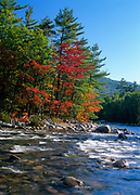 Fall colors along the Swift River. Located near the Kancamagus Highway (route 112) in the White Mountain National Forest of New Hampshire, USA
