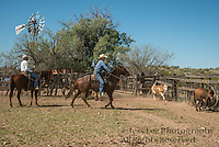 Arizona Cowboy Roping cattle to brand Cowboy Cowboy Photo Cowboy, Cowboy and Cowgirl photographs of western ranches working with horses and cattle by western cowboy photographer Jess Lee. Photographing ranches big and small in Wyoming,Montana,Idaho,Oregon,Colorado,Nevada,Arizona,Utah,New Mexico.