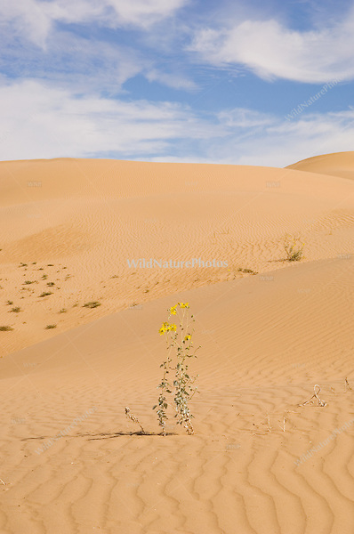 Sand Dunes and Flowers