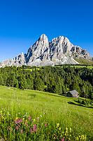 Italy, South Tyrol (Trentino - Alto Adige), Dolomites, near mountain pass Passo delle Erbe: alpine pasture with Sass de Putia mountain at Puez-Geisler Nature Park | Italien, Suedtirol (Trentino - Alto Adige), am Wuerzjoch: Peitler-Wiesen vorm Peitlerkofel im Naturpark Puez-Geisler