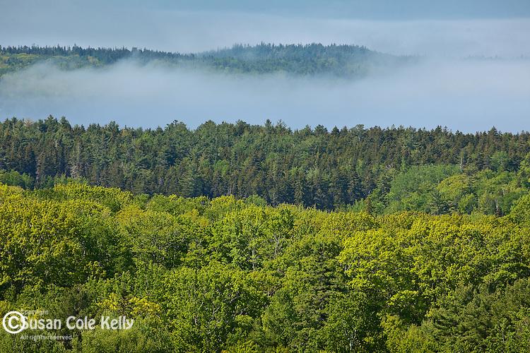 Fog rising in Eggemoggin Reach, Deer Isle, ME, USA