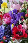Gisela, FLOWERS, BLUMEN, FLORES, photos+++++,DTGK2135,#f#