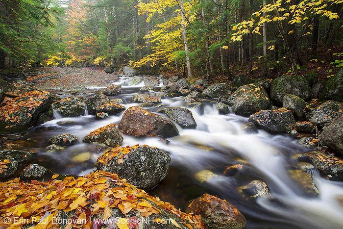 Harvard Brook in the White Mountains, New Hampshire USA during the autumn months. This area was part of the Gordon Pond Railroad era, which was a logging railroad in operation from 1905 - 1916.