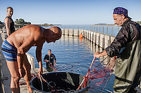 To make the fishing easier,  nets are placed close to the grate - Cabras, Sardinia.