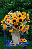 Carl, FLOWERS, photos, SWLA12002,#f# Blumen, Natur, flores, naturaleza