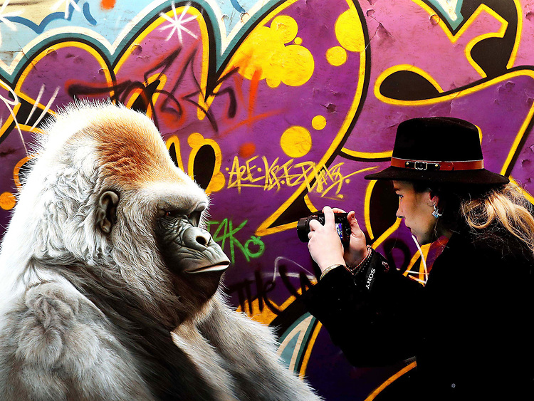"GRUMPY GORILLA<br /> A member of the public pictured taking a picture of a piece of art entitled ""Urban Gorilla"" by Paul James at the Sol Gallery stand at the opening of Art Source Ireland's premier art show held in the RDS, Dublin."
