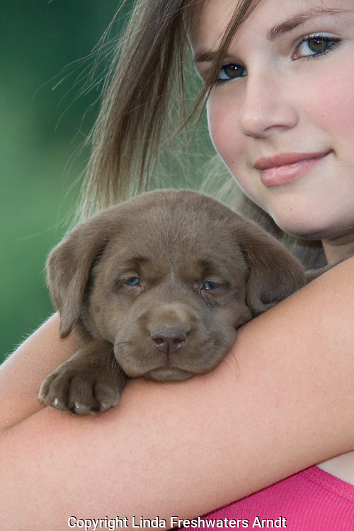 Teenaged girl holding lab puppy (Canis familiaris)