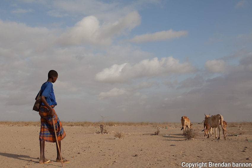 A young shepherd taking his bone-thin cattle to pasture in the morning at the edge fo Dagahaley camp. Drought has  forced tens of thousands to flee from Somalia to the world's largest refugee camp in Dadaab, Kenya.  October  2011. Brendan Bannon