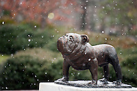 Snow flurries - Bulldog statue<br />  (photo by Megan Bean / &copy; Mississippi State University)