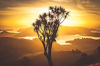 Golden dawn behind a Cabbage Tree looking over the Otago Peninsula with Hoopers Inlet in the background, South Island, New Zealand