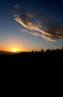 Sun setting with the silhouetted trees of the forest in the foreground. Ifonche, Tenerife, Canary Islands.