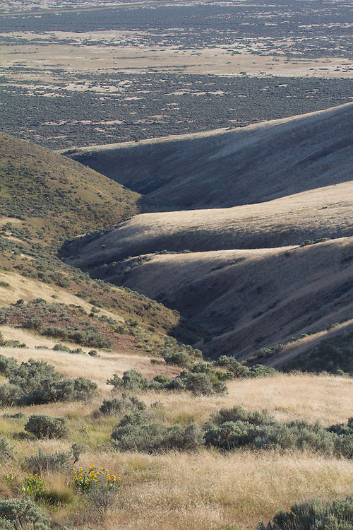 Hanford Reach National Monument, Saddle Mountain National Wildlife Refuge, Wahluke Slope, shrub steppe habitat, grassland, Columbia Basin, eastern Washington, Washington State, Pacific Northwest, USA, North America,