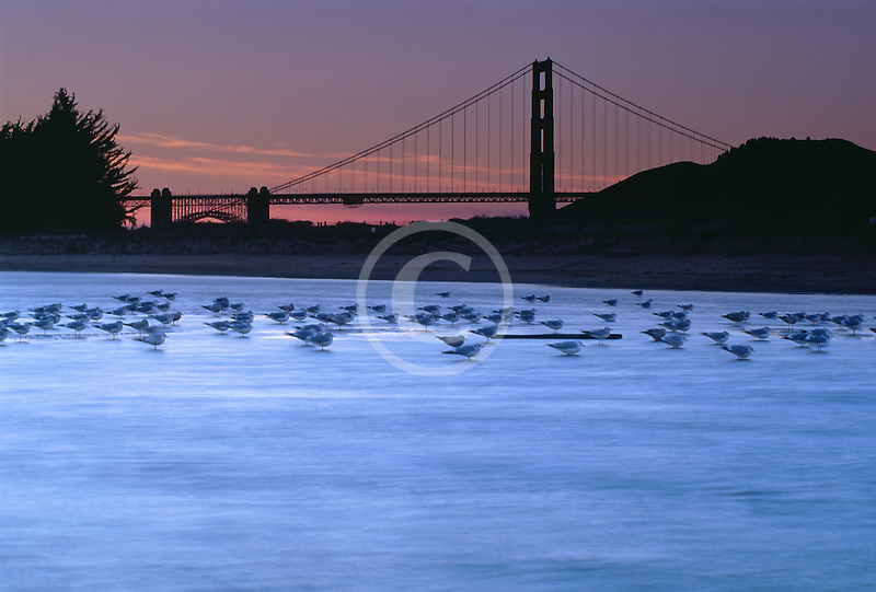 California, San Francisco, Tidal marsh at sunset with bridge, Crissy Field
