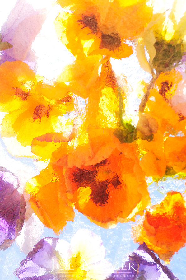 Abstract image of pansy flowers backlit through patterned glass