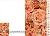 Alfredo, FLOWERS, photos, BRTOLP15277,#F# Blumen, flores