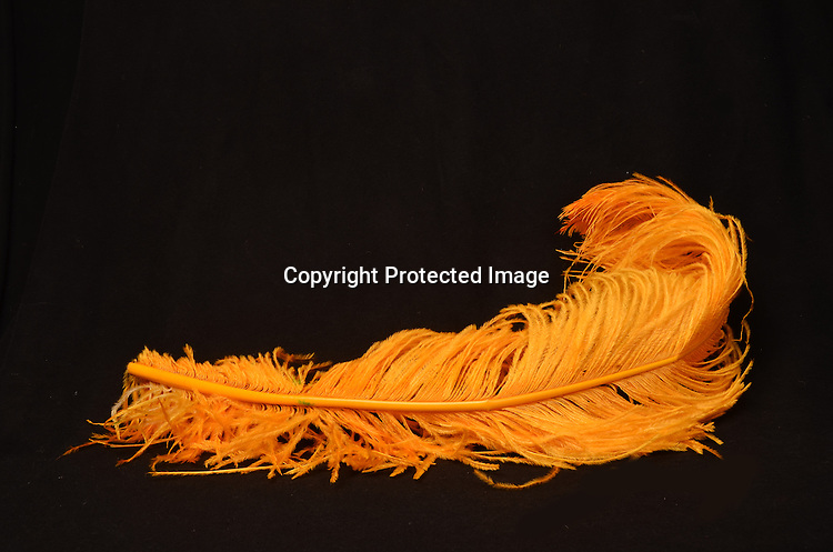 Stock photo of yellow feather