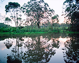 MADAGASCAR, trees reflecting on lake, Vakona Island