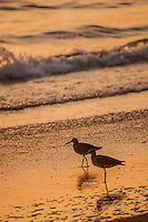 Check Out Those California Birds