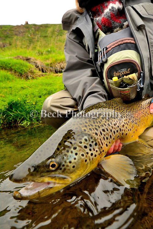 Cathy Beck's brown trout- Iceland 2013