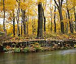An Old Stone Wall, Stream And Forest In Autumn, Southern Ohio, USA