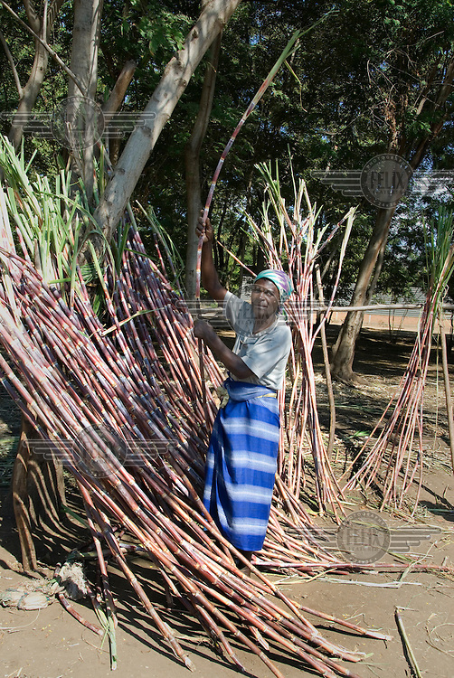 Joyce Ndamera sells sugar cane by the side of a road at a market in Mbenje.