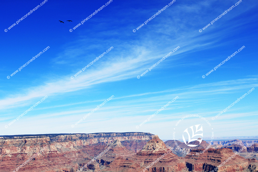 Stock photo: Two birds fly at height above the top surface of grand canyon south rim rocks with beautiful clouds pattern on blue sky.