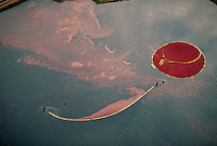 Aerial of a cranberry harvest. Carver, Massachusetts.