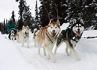 Wayne Curtis Siberian Huskies run on Finger Lake on  Monday, March 3rd, just priort to the Finger Lake checkpoint.