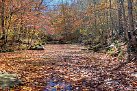 Smith Creek Preserve managed by The Nature Conservancy in Arkansas, dedicated its Smith Creek Preserve in Newton County in 2005. The 1,226-acre preserve lies above Sherfield Cave, where the largest colony of Indiana bats in the state hibernates each winter. In addition, the preserve, which is also home to gray bats, black bears and elk, conserves the surrounding forest necessary for the Indiana bats' foraging and roosting needs, and it will help ensure the water flowing into the cave and the Buffalo River - the first national river in the U.S. - remains clean. The preserve also serves as an additional connection between the Ozark National Forest and the Buffalo National River Wilderness Area.