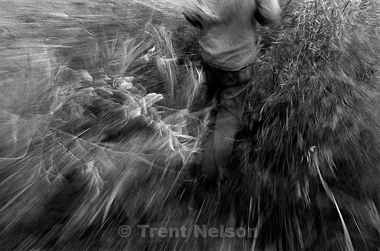Casey in his camp, walking through weeds (slow shutter)<br />