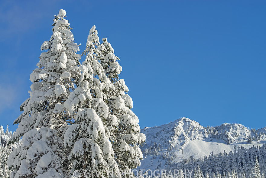 Trees and mountains in snow, Washington
