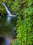 Goldstream Provincial Park, Vancouver Island, BC: Goldstream Falls on Goldstream River in summer