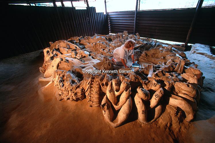 Mammoth bone and tusk hut, Mezhirich, Ukraine