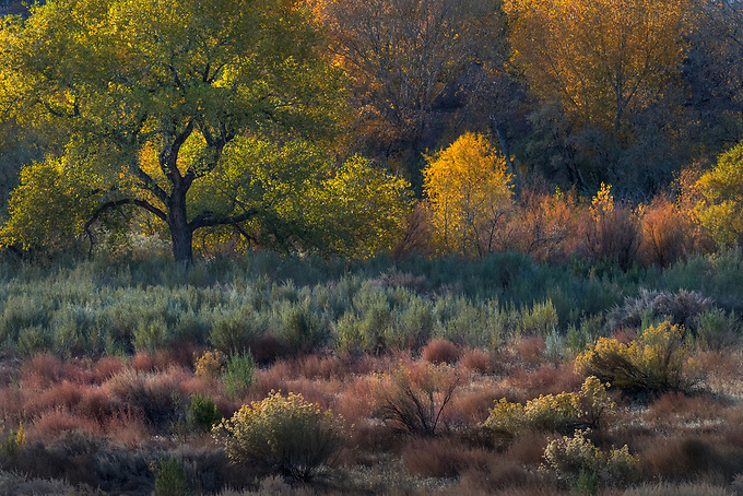 A colorful array of desert foliage glows in the late day's light.