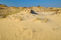 Sand dunes at Carter Bay<br /> Manitoulin Island<br /> Ontario<br /> Canada