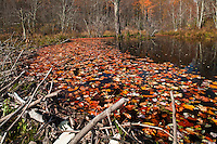 Beaver pond on Cold Prong, Blue Ridge Parkway, North Carolina