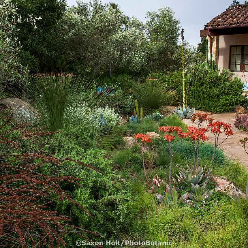 Front yard summer-dry garden with Aloe and California native grasses, Santa Barbara California