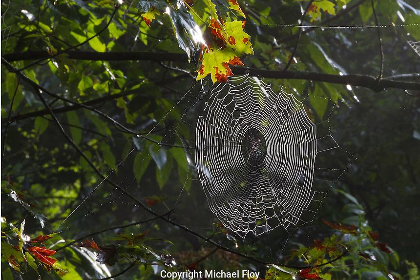 Spyder Web in Morning Sun Light Beaver Creek State Park