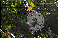 Spyder Web in Morning Sun Light Beaver Creek State Park