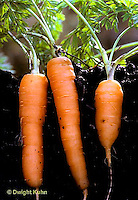 HS12-001x  Carrot - Nantes, Rondino variety