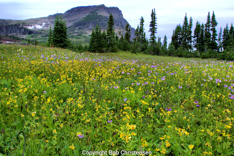 Photos from Glacier National Park