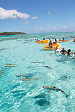 FRENCH POLYNESIA, Moorea. Group of tourists swimming with the sharks.