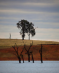 Dead trees in Lake Hume, Victoria. Lake Hume, or Hume Weir, is an artificial lake on the Murray River, east of Albury-Wodonga, and downstream from the river's junction with the Mitta River. Created in the 1930s, it is the furthest downstream of the major reservoirs on the Murray River system, and has the capacity to release water at the fastest rate. As a result,  Lake Hume is used by Australian irrigation authorities as the storage of first resort.  Lake Hume typically falls to less than one-third of its capacity by March each year, but during normal  years fills to at least two-thirds capacity again before November. Changing climatic conditions have caused this to vary in recent years, and in 2007, Lake Hume to an incredible 1% of its capacity, barely more than the water in the Murray and Mitta rivers flowing through it.