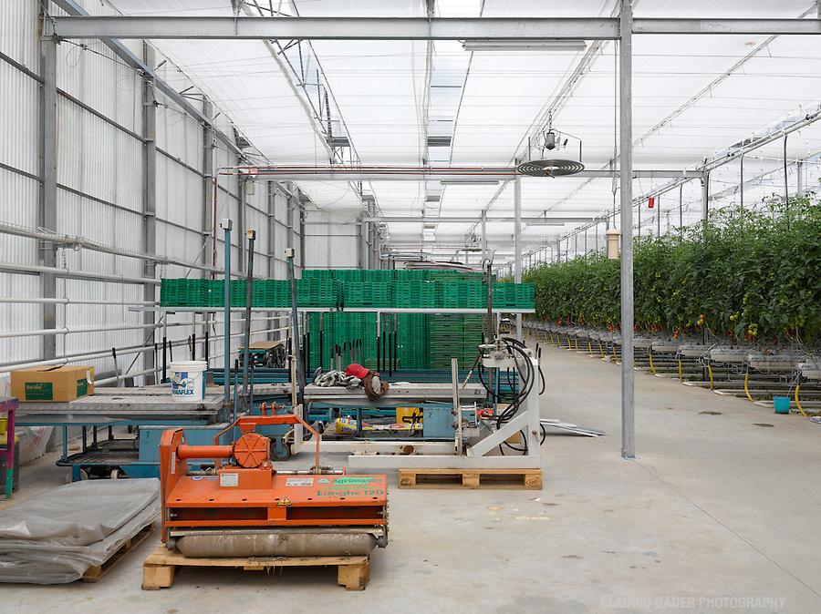 Switzerland; Ticino; Magadino; Sopraceneri; Agriculture; Industrial; Reportage; Greenhouses; Tomatoes growing; Greenhouse; Plants