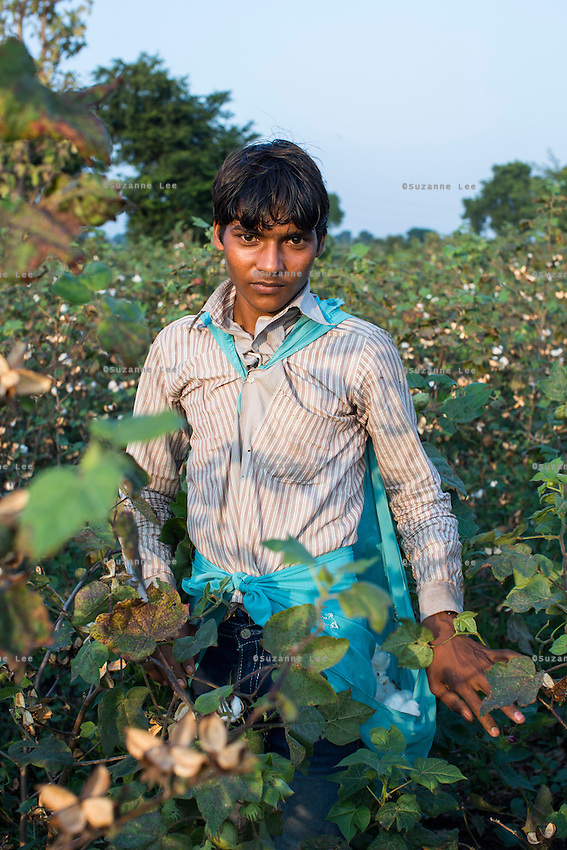 Fairtrade cotton farm labourer Radhakrishnan, 19, picks cotton in Narendra Patidar's farm in Karhi, Khargone, Madhya Pradesh, India on 12 November 2014. While his father also owns a farm, he works as a labourer in other farms when there is nothing to do in his father's farm. He earns 5 rupees per kilogram and can pick up to 40kg per day. Photo by Suzanne Lee for Fairtrade