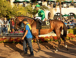December 1 2018: #6 Raging Bull, ridden by Joel Rosario, heads to the track before the Hollywood Derby (Grade 1) on December 1, 2018, at Del Mar Thoroughbred Club in Del Mar, CA.