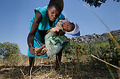 Liliosa, 16, forages for wild fruits in Masvingo Province, Zimbabwe, to feed herself, her baby and her young sister, who is born HIV positive. <br /> <br /> Drought in southern Africa is devastating communities in Zimbabwe, leaving 4 million people urgently in need of food aid. The government declared a state of emergency,. <br /> <br /> Here in Masvingo Province, the country's hardest hit province, vegetation has wilted, livestock is dying, and people are at serious risk of famine. <br /> <br /> Pictures shot by Justin Jin