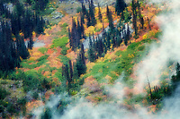 Fall color and low clouds. North Cascades National Park. Washington