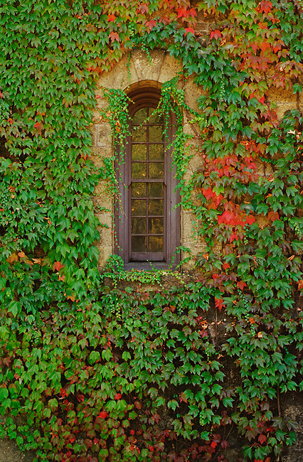 Window at Chateau Montelena
