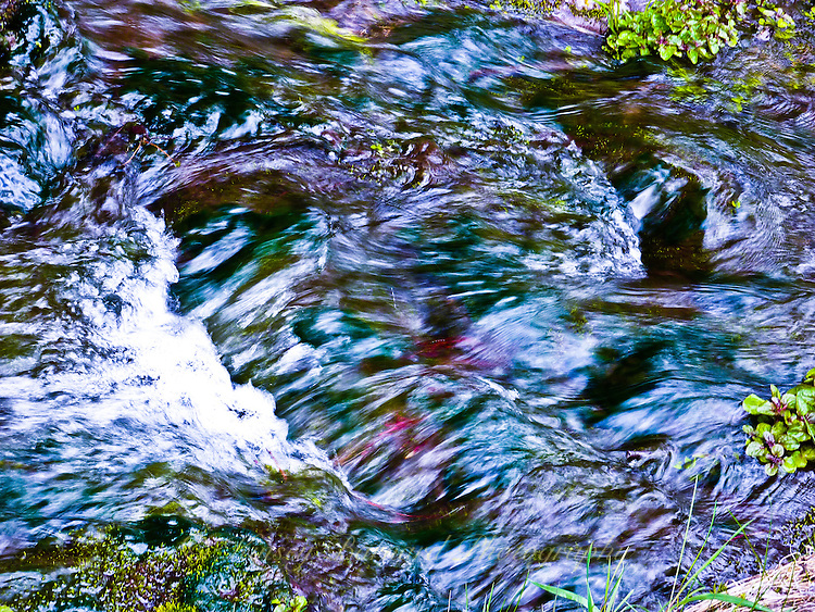 Purple, blue and green riot of color on DeRozier Creek